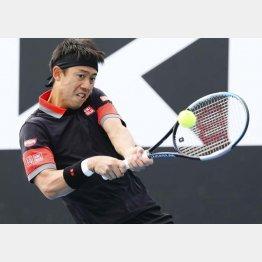 錦織のテニスは見て面白い(C)共同通信社