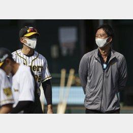 阪神宜野座キャンプを訪れ、矢野監督(左)と笑顔で話す藤川球児氏(C)共同通信社