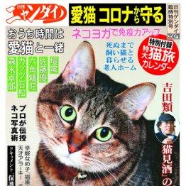 臨時特別号【日刊ニャンダイ】絶賛発売中!