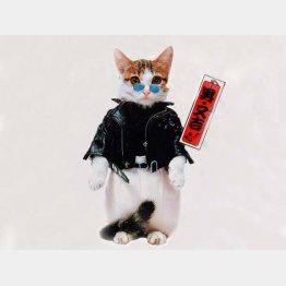 「なめんなよ」 (C)SATORU TSUDA/禁・複写&転載