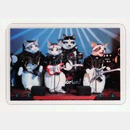 なめ猫カード(C)SATORU TSUDA/禁・複写&転載