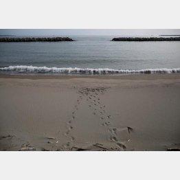 気象庁によると津波の被害はないというが(宮城・石巻市の海岸)/(C)ロイター