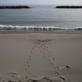 NZ沖でM8.1の大地震 日本は津波被害の恐れなしと気象庁
