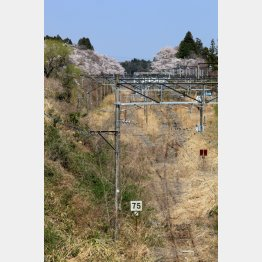 2014年4月13日、震災の日以来、運休が続く夜ノ森駅は草に埋もれていた(写真)藤原亮司