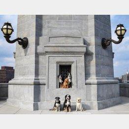 写真①スティーブンさんの愛犬たち(インスタグラムから)