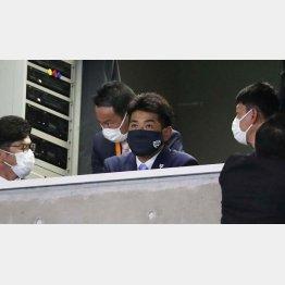 巨人-中日戦を視察する稲葉日本代表監督(C)日刊ゲンダイ