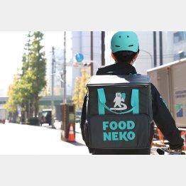 韓国のFOODNEKO(フードネコ)のネコライダー(C)日刊ゲンダイ
