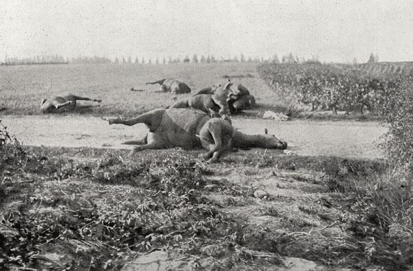 第1次世界対戦でベルギーの路上に残された馬の死体(World History Archive/ニューズコム/共同通信イメージズ)