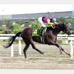 05年のかしわ記念が初のビッグタイトル(提供)千葉県競馬組合