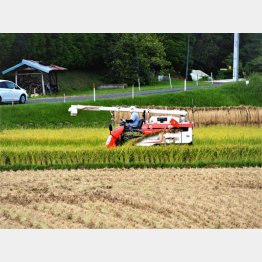 日本のコメ農家はどうなる?