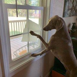 わが家にも1匹欲しい!米国でホンモノのお掃除犬が話題に