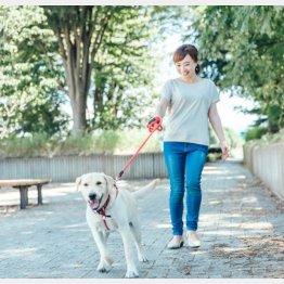 犬の散歩などあらゆる分野で急増中