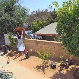 米17歳少女が愛犬を救うために子連れのクマと戦って撃退!
