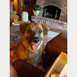 愛犬のティリー(リンダさんフェイブックから)