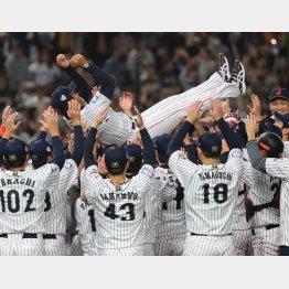 2019プレミア12の再現なら選手は1000万円(C)日刊ゲンダイ