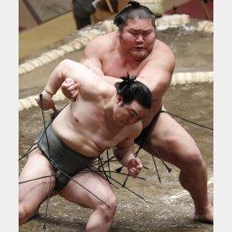 千代ノ皇はおっとりした性格で地道に努力するタイプ(C)日刊ゲンダイ
