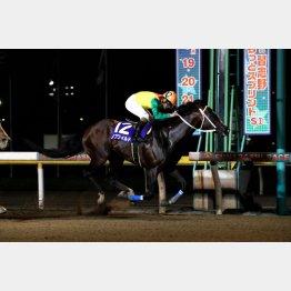習志野きらっとスプリント 2頭目の連覇「ノブワイルド」(提供)千葉県競馬組合