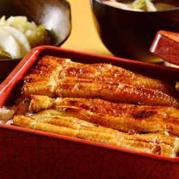 御蒲焼所 鰻家(東京・石川台)高級羽毛布団のようにふっくらで肉厚