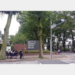 東京・吉祥寺の広大なキャンパスに小学校から大学まで収まっている(撮影:筆者)