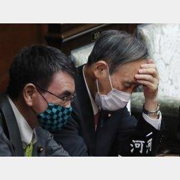 菅首相(右)と河野大臣(C)日刊ゲンダイ