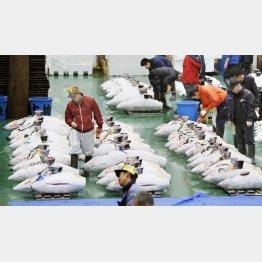 豊洲市場でのマグロの競りの様子(C)共同通信社