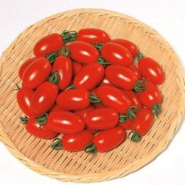 「サカタのタネ」に聞いてみた 家庭菜園は財布の節約になりますか?