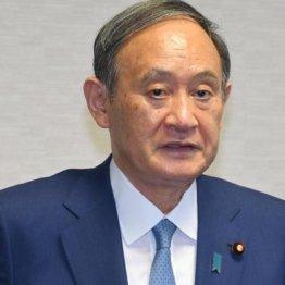 国民の総意は菅NO 自民党総裁選は「浅ましさ」の見本市