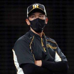 阪神V逸なら矢野監督の去就はどうなる? クビをかけた巨人との天王山3連戦
