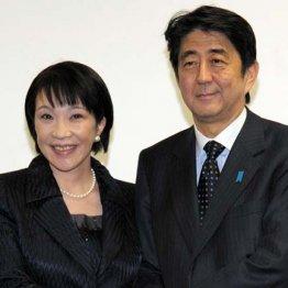 来たる総選挙は日本が完全に終わるか、自民党が終わるかの二択