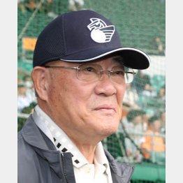 野球評論家の張本勲氏(C)日刊ゲンダイ