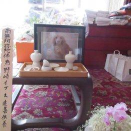 <55>苦しんで暴れて死んだ愛犬イブに動物病院は「老衰」と診断
