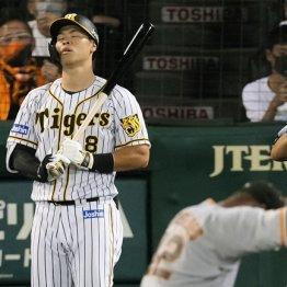 阪神・矢野監督に告ぐ 佐藤輝明の才能を中途半端な起用で潰すことは許されない