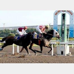 ボンネビルレコードが最後はグイッと前へ(提供)千葉県競馬組合