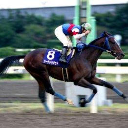 もっと知ろうよ船橋ケイバ「04年平和賞シーチャリオットはダーレー・ジャパンの日本における最初の重賞勝ち」